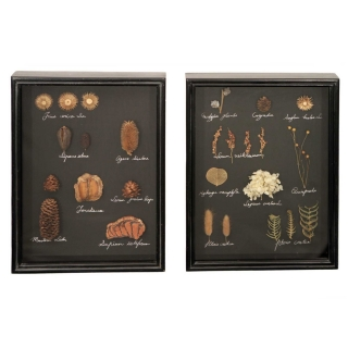 Pair of Framed Dried Foliage Wall Art