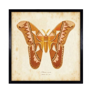 Timothy Oulton Entomology Brown Natural Butterfly