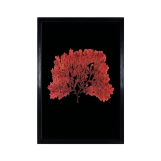 Timothy Oulton Sealife Red Wall Art